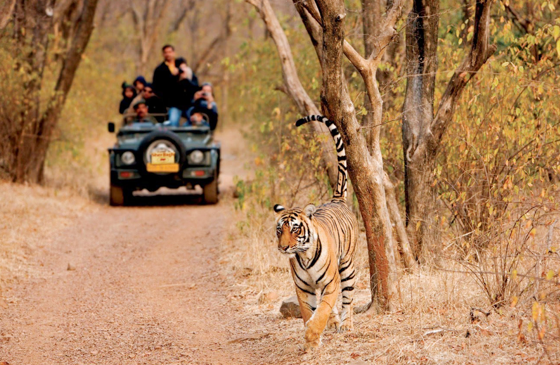 best-of-rajasthan-with-wildlife-tour